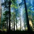 Nessun uomo dovrebbe vivere senza aver sperimentato almeno una volta la sana anche se noiosa solitudine di una dimora tra i boschi, scoprire di dover dipendere solo da se stessi, […]