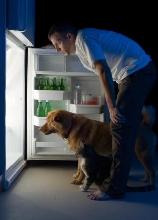 man_cat_dog_fridge2