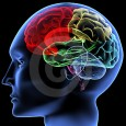 """I cinesi lo chiamavano """"Cuore Celeste"""", l'antroposofia """"l'organo dello Spirito"""". Per le neuroscienze il cervello in azione è la mente. Definitivamente, per Joe Dispenza – che Scienza e Conoscenza ha […]"""