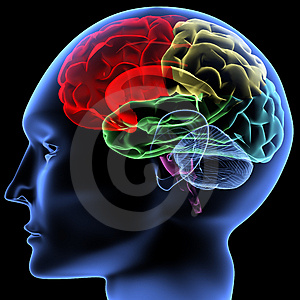 Neuroplasticità e arrampicata Cervello-thumb4649675