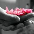 Insieme per un mondo più gentile – Più gentile con gli altri, più gentile con Te Stesso, più gentile con l'Ambiente.