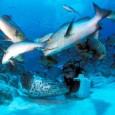 Tonno rosso, pesci spada, squali, salmoni, merluzzi, branzini. Negli ultimi anni si è assistito ad un impressionante declino di moltissime specie di pesci e abitanti del mare. Causa di questo […]